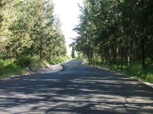 יער המגינים
